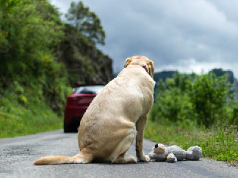 Projeto de lei cria a campanha Dezembro Verde, contra o abandono de animais