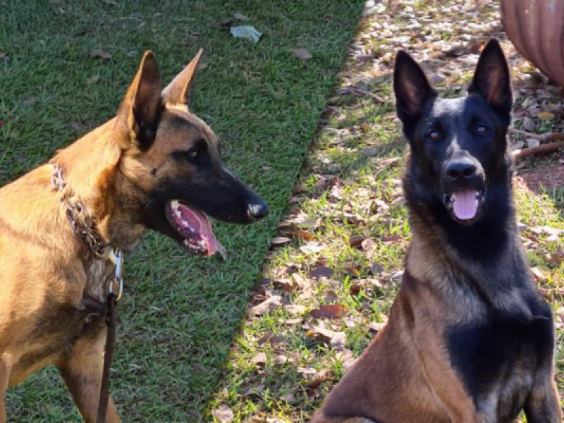 Dois novos cães de detecção vão reforçar a fiscalização agropecuária