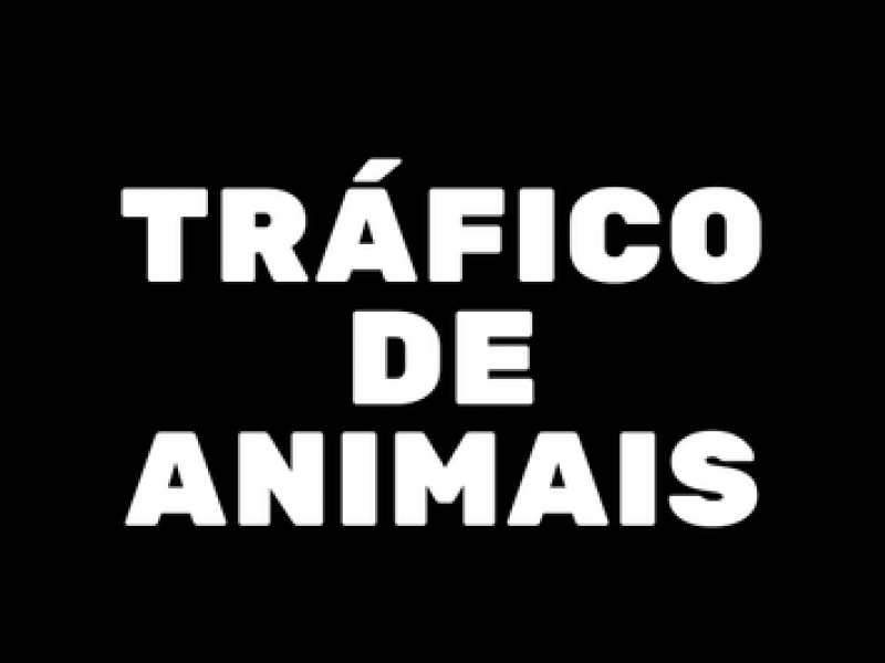 MPF denuncia associação criminosa especializada em tráfico de animais silvestres