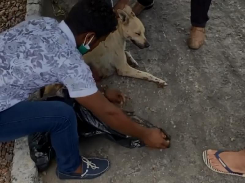 Cadela é esfaqueada por feirante após pegar pedaço de carne no interior de AL
