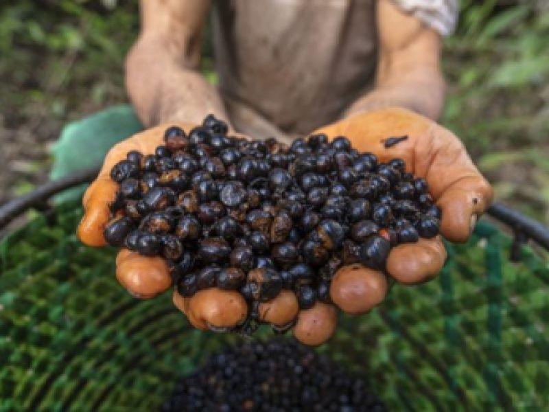 Ministério do Meio Ambiente (MMA) lança programa Floresta+ Bioeconomia