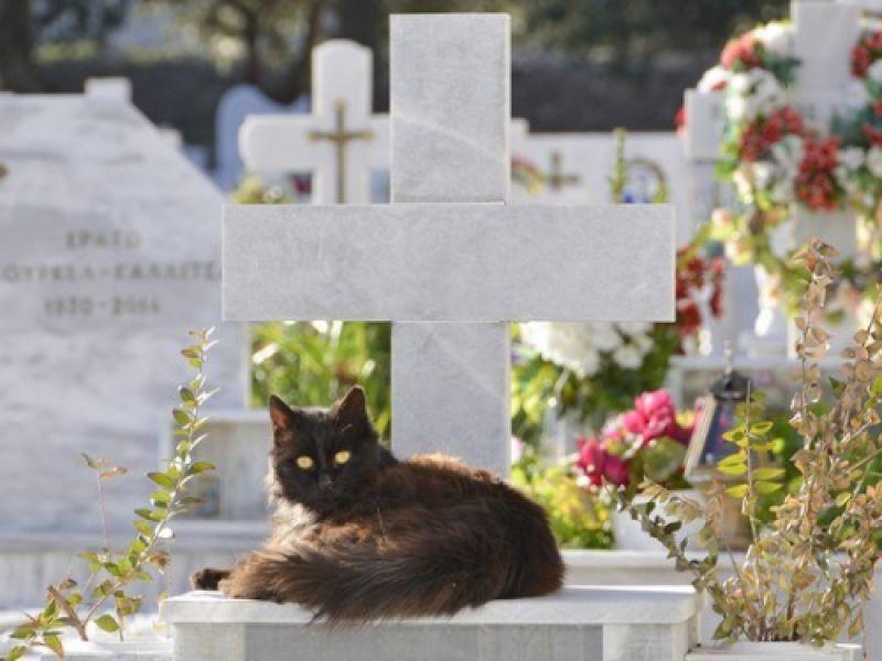 Projeto autoriza instalação de cemitérios e crematórios de animais domésticos em Alagoas