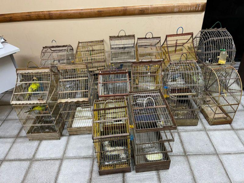 Sergipe: Adema recebe 15 aves que estavam sendo mantidas em cativeiro