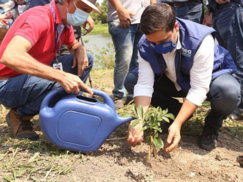 Estado do Rio de Janeiro tem ações em comemoração ao Dia da Árvore no Brasil