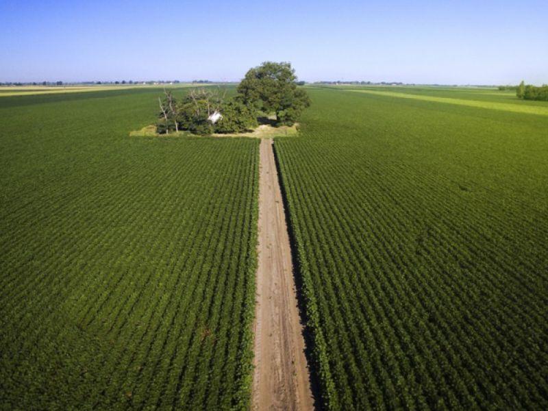 Valor da produção agrícola nacional tem recorde em 2020 com R$ 470,5 bilhões