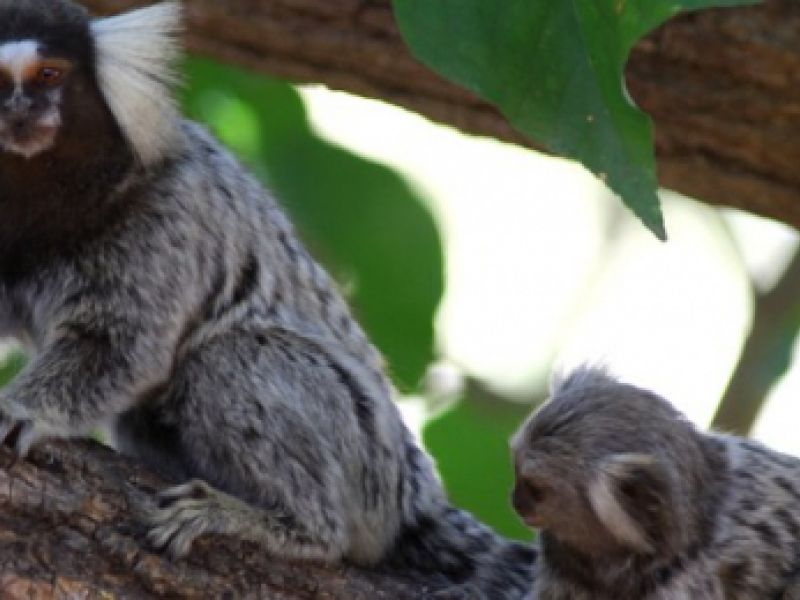 Ministério do Meio Ambiente lança Programa Nacional de Resgate de Fauna Silvestre