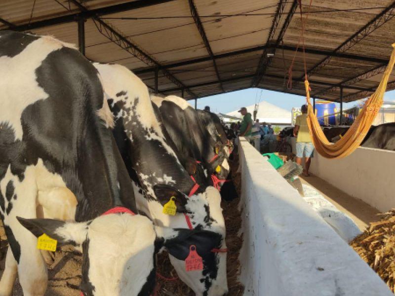 Produtores de leite comemoram equilíbrio do preço e liberação de crédito a baixo custo