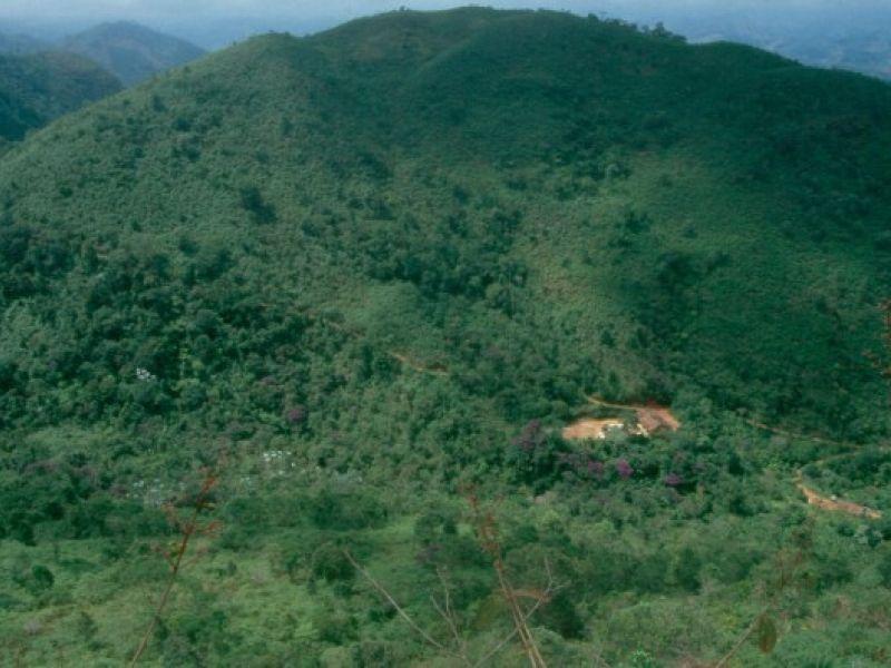 Projeto de plantio de mudas de árvores da Mata Atlântica