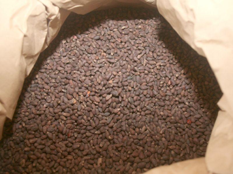 Governo inicia calendário de distribuição de sementes